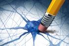 Maladies d'Alzheimer et Parkinson : nouveaux espoirs