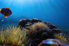Un ver marin pour révolutionner les greffes d'organes