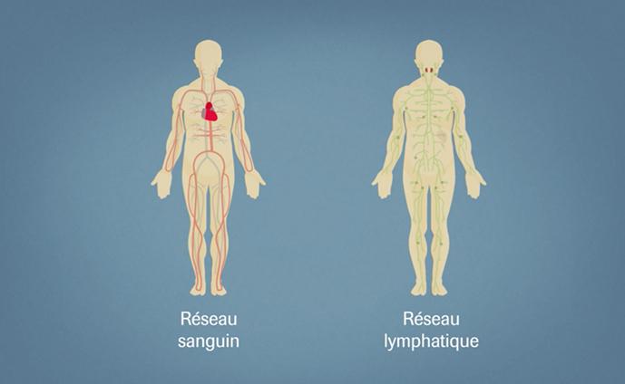 Tout comprendre sur les différences entre leucémies et lymphomes