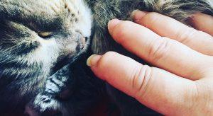 Laurence Boccolini rompt le silence sur la polyarthrite rhumatoïde