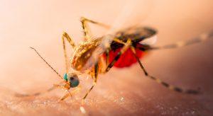 Qu'est ce que le virus du Nil occidental?