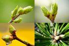 Gemmothérapie : et si on se soignait avec des bourgeons ?