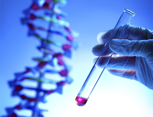 Cancer: 25% des patients répondent favorablement à l'immunothérapie